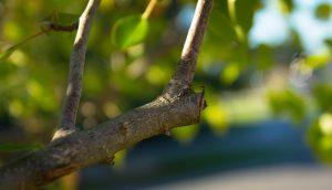 pruning-499257_960_720