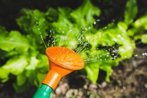 watering-791312_960_720