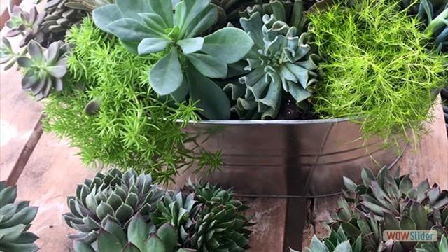 succulents 030617