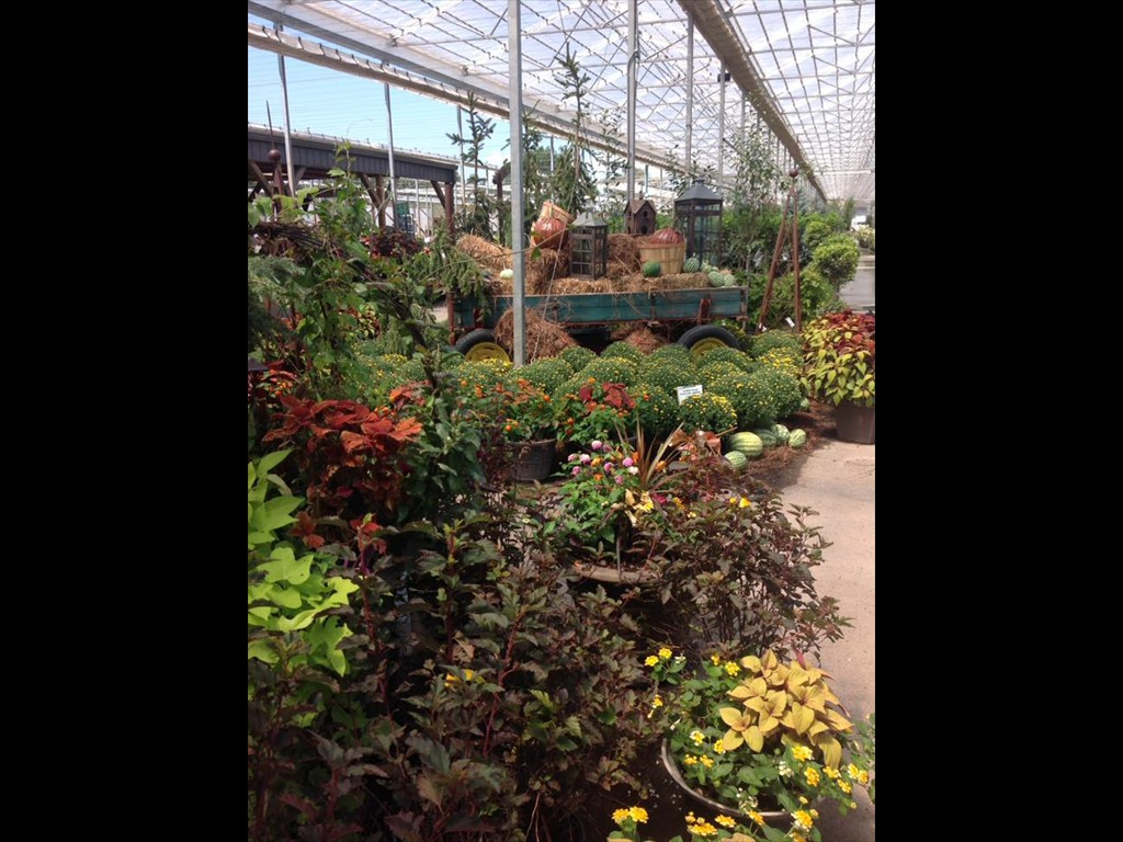 Sanders Nursery – Wholesale Nursery and Plant Supplies
